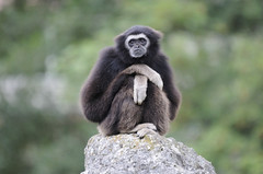 Thinking monkey - Photo of Saint-Flovier