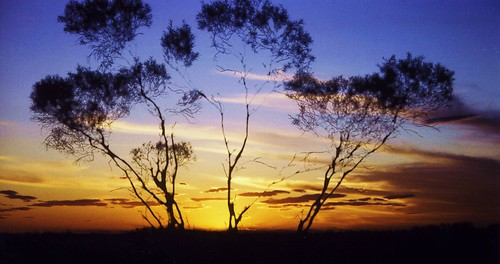 The famous outback in Australia at sunset.