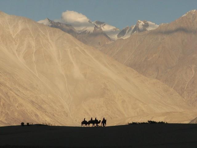 Nubra Valley Camels