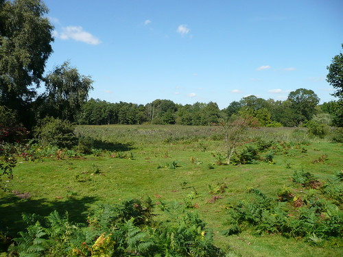 Market Weston fen