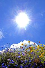 Sunshine and Wild Flowers