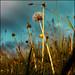 Sunshine by Soffia Gisladottir