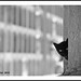 Cat in the Cemetery - Barcelona N3802e by Harris Hui (in search of light)
