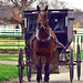 Small photo of Amish Buggy Ride