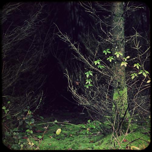 texture forest mos denmark moss branches fir danmark 2010 skov firtrees efterår project365 skovbund blackberrybranch fakettv 320365 grantræer november2010 161110 canoneos5dmrkii project36612010 3202010 darknessandgreen ødis brombærgren
