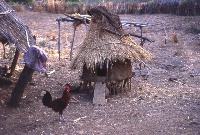 Chicken and chicken house, Southeast Sénégal (West Africa) - a photo ...