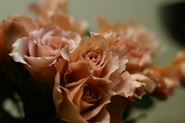 Photo:ジュリア(rose) By kanonn
