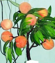 vegetable(0.0), citrus(0.0), flower(0.0), plant(0.0), food(0.0), peach(1.0), branch(1.0), produce(1.0), fruit(1.0),