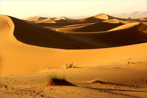 shadow grass sunrise landscape sand bravo dunes morocco maroc footsteps schaduw zon marokko zand earlyinthemorning voetstappen merzouga zonsopkomst zandduinen theunforgettablepictures