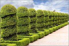 shrub, tree, plant, green, hedge,