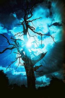 #01 - Spooky Tree