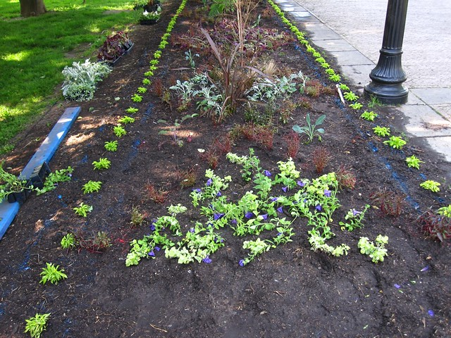The last remnants of water-based spay paint are barely visible after 2 days of hard work planting the beds in the Annual Border.