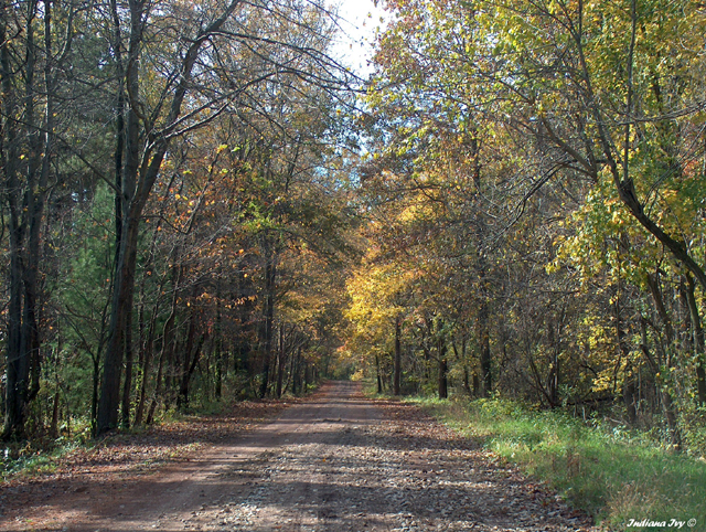 Greene-Sullivan State Forest 03 | Indiana Ivy Nature ...