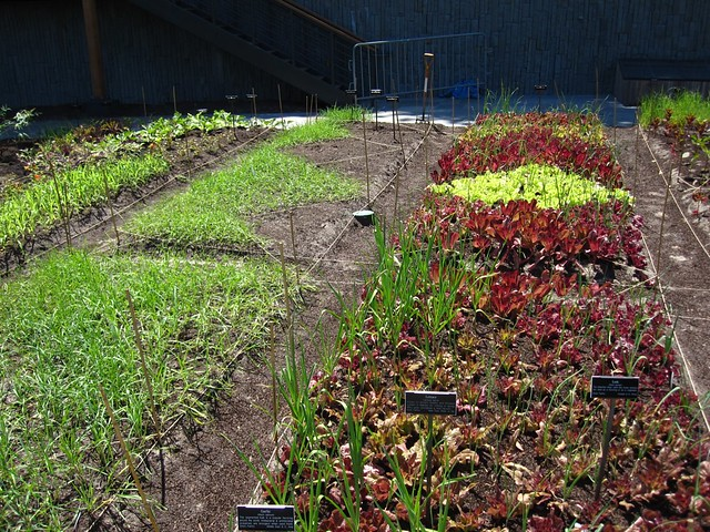 More herbs being added to complete the bed design in the Herb Garden. Photo by Rebecca Bullene.