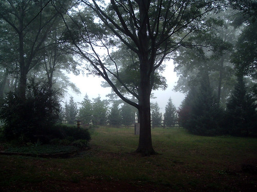 Foggy Morning, My Backyard
