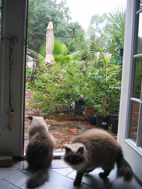 Two cats with garden 3