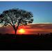 Small photo of El sol de Ayer