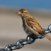 Small Bird, Large Chain