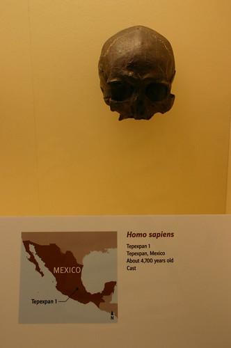 Homo Sapiens 4,700 Years Old