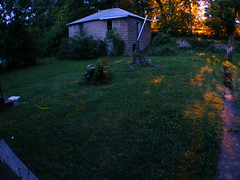 Fireflies 12