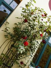 art, flower arranging, window, flower, branch, floral design, plant, flora, spring,