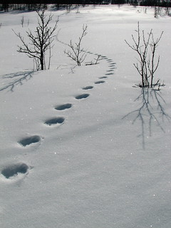 Norwegian footprints