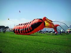 kite sports, aircraft, vehicle, windsports,