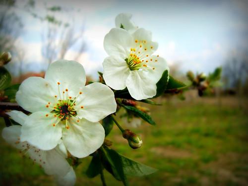 Citate Pentru Fotografi : Despre primăvară Şiraguri de g nduri