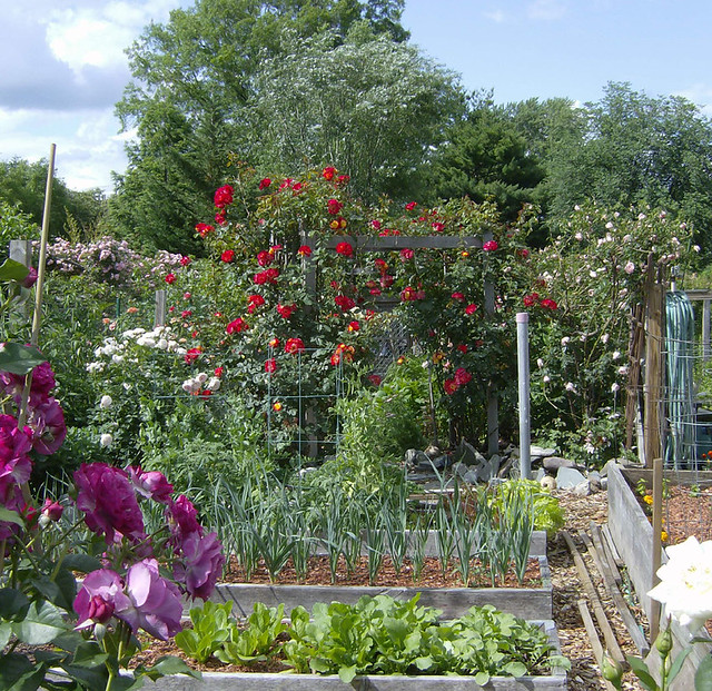 vegetable gardens can be beautiful flickr photo sharing