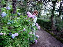 blossom(0.0), backyard(0.0), garden(0.0), yard(0.0), hydrangea(1.0), woodland(1.0), shrub(1.0), flower(1.0), plant(1.0), lilac(1.0), wildflower(1.0), flora(1.0), gardener(1.0), hydrangeaceae(1.0),