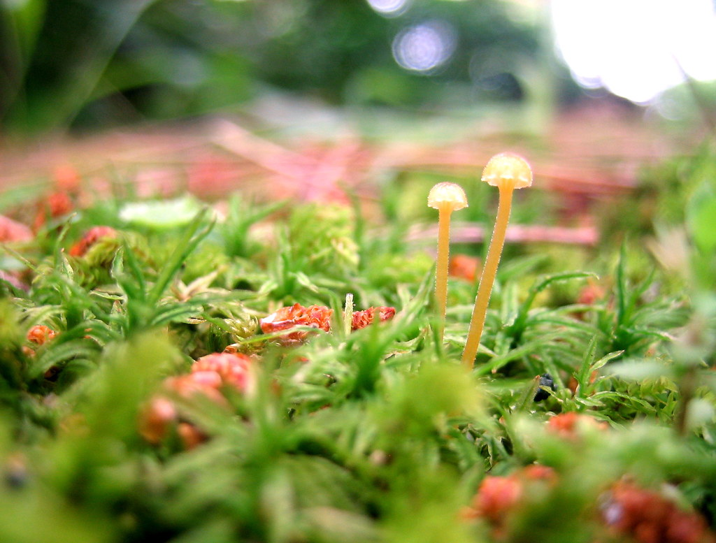 miniature woods