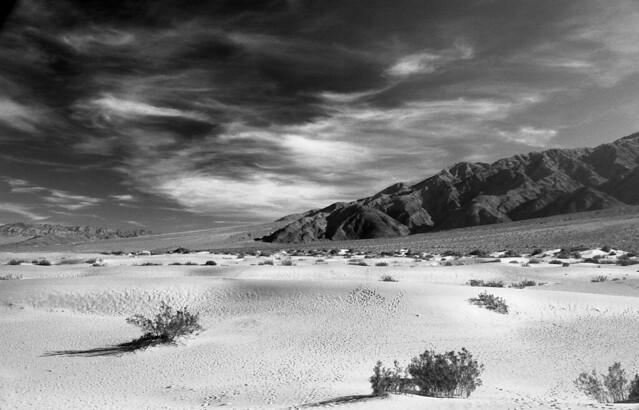 Devils Cornfield - Death Valley National Park