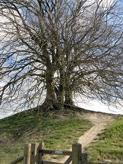 Ancient Tree at Avebury