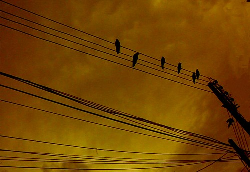 birds on wire...