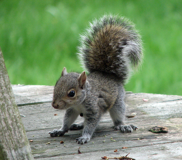 Squirrel Babies - a ga...