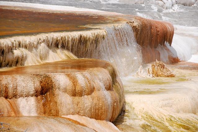 Mammoth Hot Springs (5)