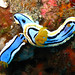 Chromodoris annae - Photo (c) Silke Baron, some rights reserved (CC BY)