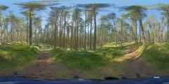 Aviemore: Pine Wood Speybank Kincraig Scotland
