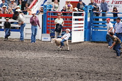 animal sports, rodeo, event, sports,