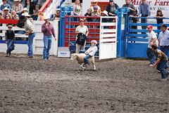 bull(0.0), equestrian sport(0.0), barrel racing(0.0), bull riding(0.0), animal sports(1.0), rodeo(1.0), event(1.0), sports(1.0),