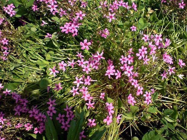 Some garden flowers