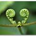 Fern Heart, Rain Forest, Malaysia by THX911