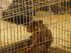 dog crate(1.0), cage(1.0), animal shelter(1.0),