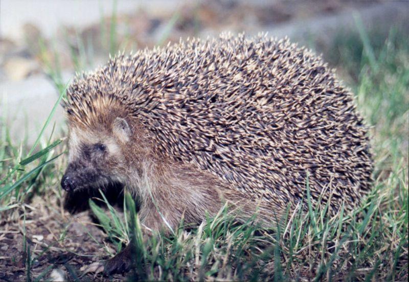 Animales beneficiosos para el jardín