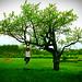 beautiful tree by Flamur Jonuzi
