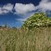 Elderflower over reedbeds by JeanM1