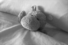 Hippo Tucked In