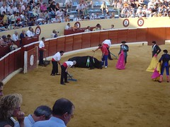 tradition(0.0), performing arts(0.0), animal sports(1.0), event(1.0), sports(1.0), bullring(1.0), matador(1.0), performance(1.0), bullfighting(1.0),