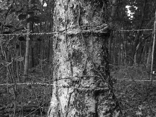 blackandwhite bw tree texture nature fence wire bark slavery barbed swelling