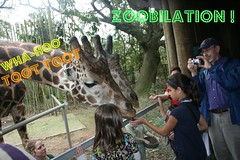 Zoobilation Giraffe Feeding